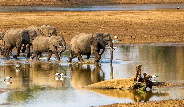 Wild Zambia - 9 days from $6795